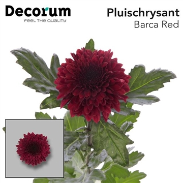 CHR G BARCA RED Decorum