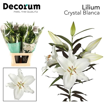 LI OR CRYSTAL BLANCA decorum
