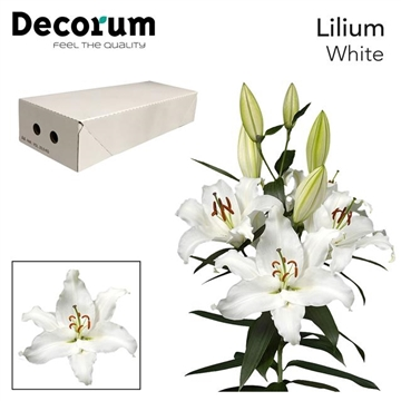 LI OR WHITE DECORUM