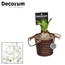 Hyacint Copper Bucket HL15608WP [COFFEE & CHAMPAGNE]