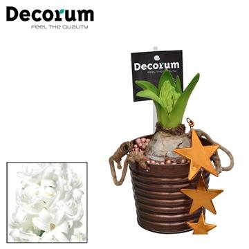 Hyacint Copper Bucket HL15609WP [COFFEE & CHAMPAGNE]
