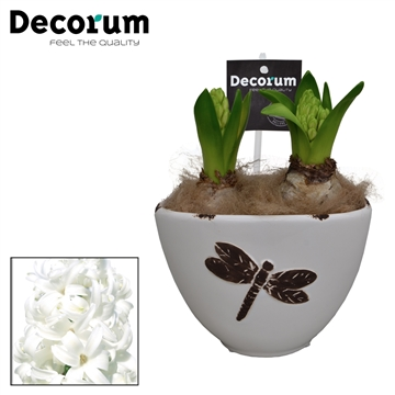 Hyacint Libelle HL15358WP [COFFEE & CHAMPAGNE]
