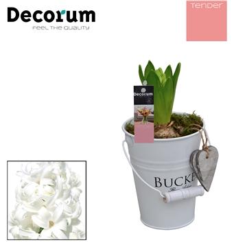 Hyacint White Bucket Mini HL18534WP [TENDER]