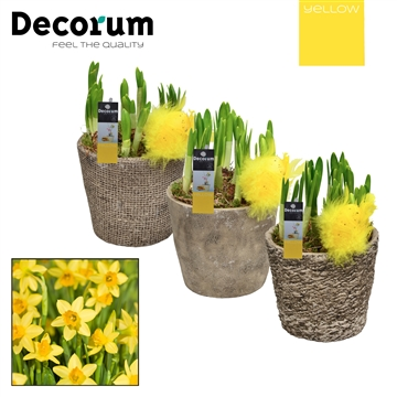Narcis Vintage HL15385 [YELLOW]