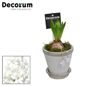 Hyacint Crackle Pot Mini HL18332WP [BLACK & WHITE]