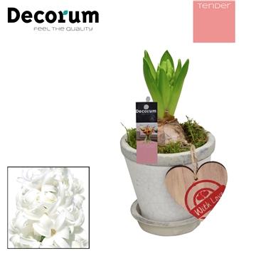 Hyacint Crackle Pot Mini HL18334WP [TENDER]
