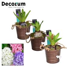 Hyacint Copper Bucket HL15601 [PURE]