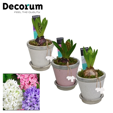 Hyacint Crackle Pot Mini HL18331 [LOVELY COLORS]