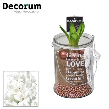 Hyacint Giving Love mini HL15809WP [COFFEE & CHAMPAGNE]
