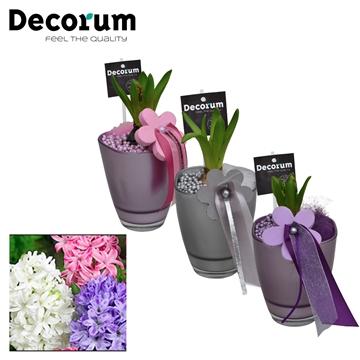 Hyacint Bombay HL15093 [LOVELY COLORS]