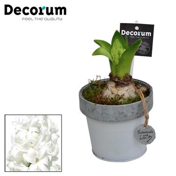 Hyacint Bucket & Border Mini HL17511WP [BLACK & WHITE]