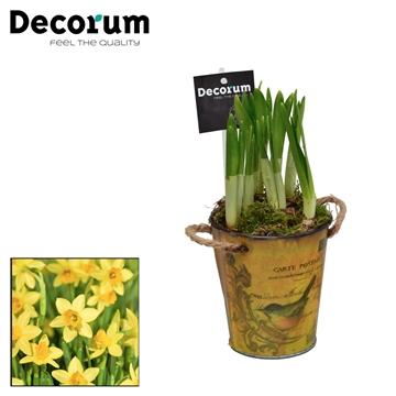 Narcis Little Spring Bucket HL15470