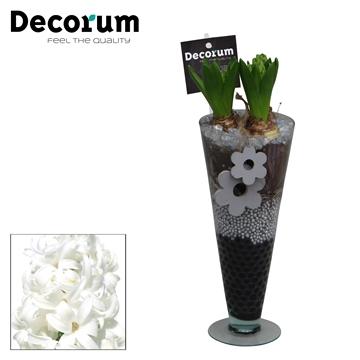 Hyacint Lincoln HL15013WP [BLACK & WHITE]