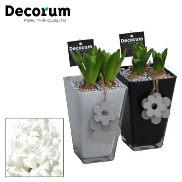 Hyacint Colour Vierkant Glas HL15083WP [BLACK & WHITE]