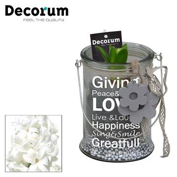 Hyacint Giving Love mini HL15803WP [BLACK & WHITE]