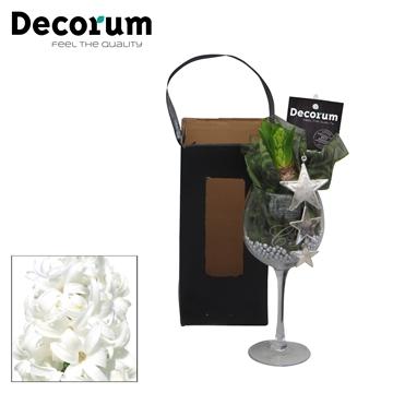 Hyacint Wijnglas HL16062WP [BLACK & WHITE]