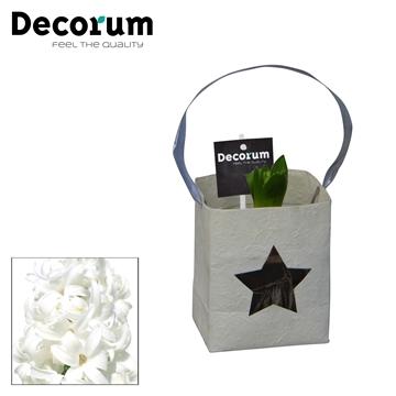 Hyacint Tasje HL16500WP [BLACK & WHITE]