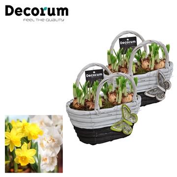 Narcissus Gevlochten Mand Maxi HL18713N