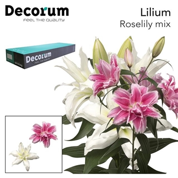LI OR DU RL MIX DECORUM