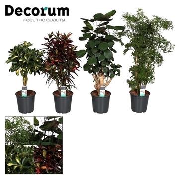 Groenmix Hawaii (diverse soorten) (Decorum)