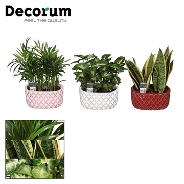 Keen on Green mix 7 cm in duo pot Lieve (Decorum)