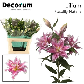 LI OR DU RL NATALIA decorum