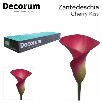 ZANT CHERRY KISS