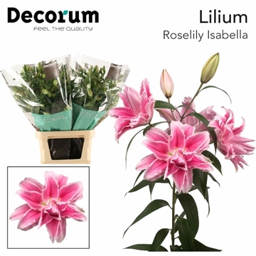 LI OR DU RL ISABELLA Decorum