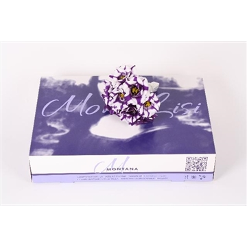 Lisianthus mono lisi fleur elisa blue