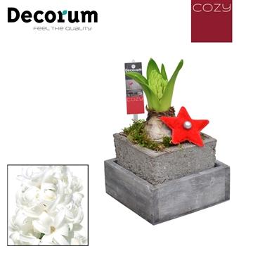 Hyacint Square Wood Tray HL18246WP  [COZY]