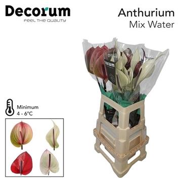 ANTH A WATER MIX 20 L Decorum