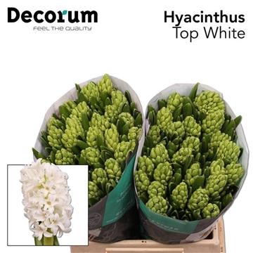 HYAC TOP WHITE