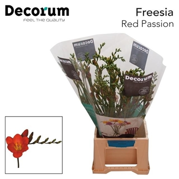 Fr en Red passion Decorum