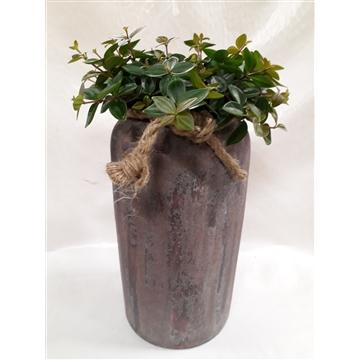 RDV21ANG Rude Dark Vase Pep.Angulata