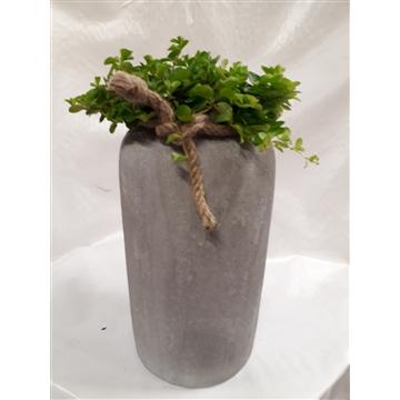 RGV21ROT Rude Grey Vase Pep.Rotundifolia