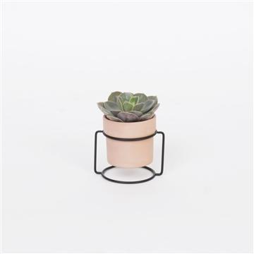Pedestal Solo Terracotta with Succulent mix