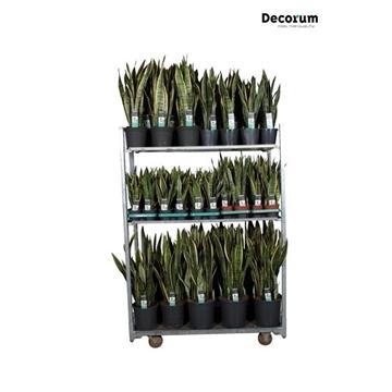 MIXKAR 240162 (Decorum) 1