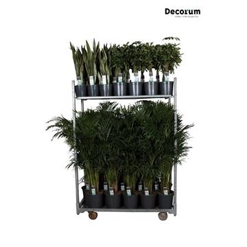 MIXKAR 240163 (Decorum) 2