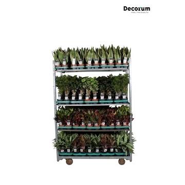 MIXKAR 240166 (Decorum) 5