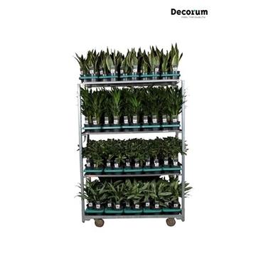 MIXKAR 240167 (Decorum) 6