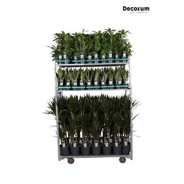 MIXKAR 240169 (Decorum) 8
