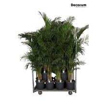 MIXKAR 240175 (Decorum) 14