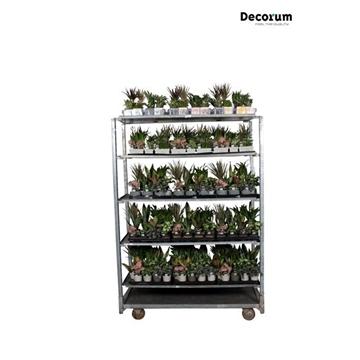 MIXKAR 240178 (Decorum) 17