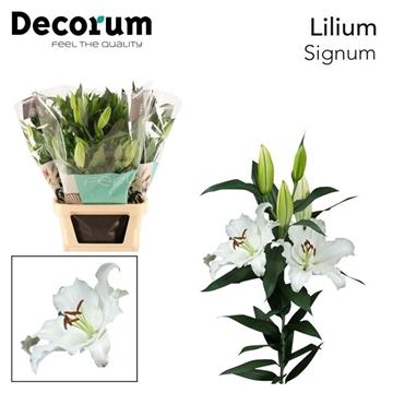LI OR SIGNUM Decorum