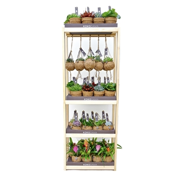 Kokodama Display Rack (incl. 40 plants)