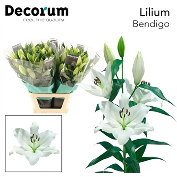 LI OT BENDIGO Decorum