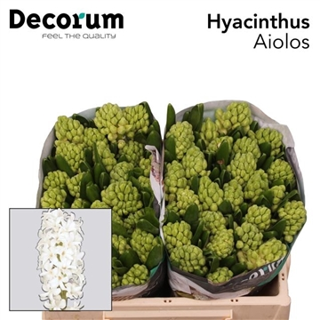 HYAC AIOLOS