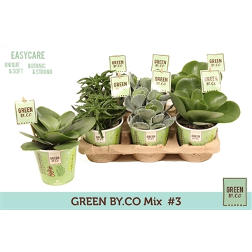 GREEN BY.CO Mix #3 (Succulent)