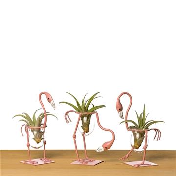 Flamingo set + airplant/tillandsia
