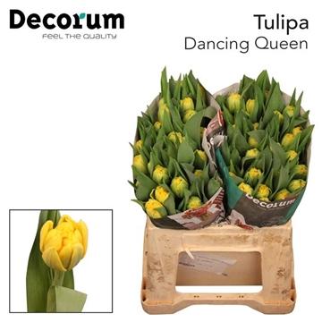 TU DU DANCING QUEEN